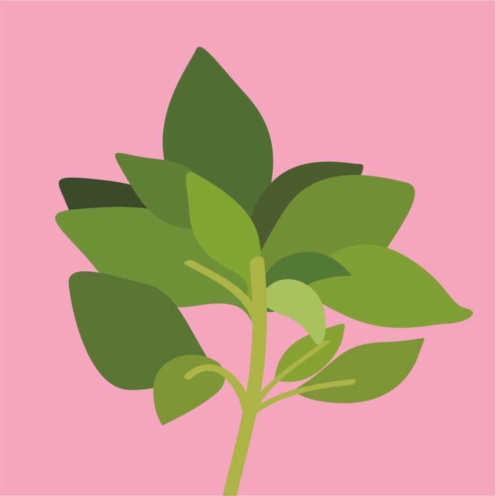Интересные факты про растения